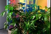 focus-folienbeschriftung-nuernberg-cubes-dichroitische-folie-design-offices-11