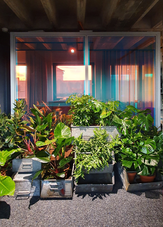 Grüne Zimmerpflanzen vor Glasscheiben mit dichroitische Folie